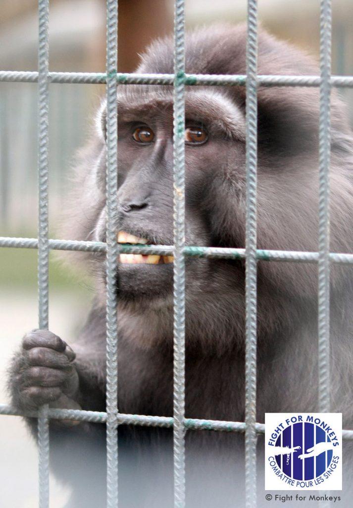 © Fight for Monkeys